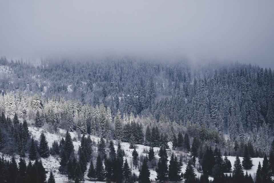 snow winter white cold weather ice trees plants nature woods forest travel adventure mountain fog