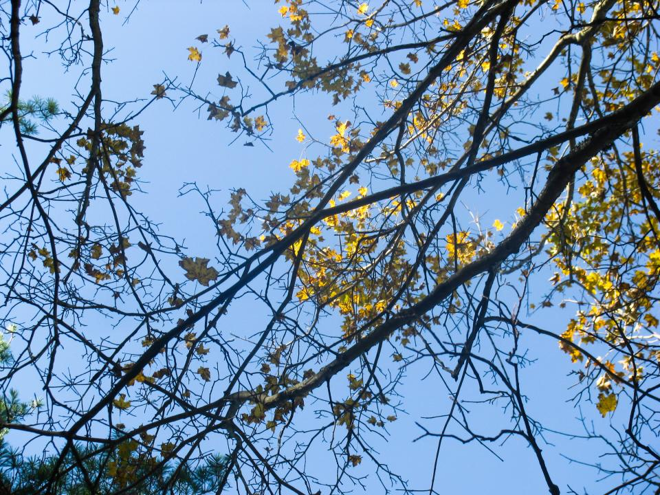 trees branches leaves sky