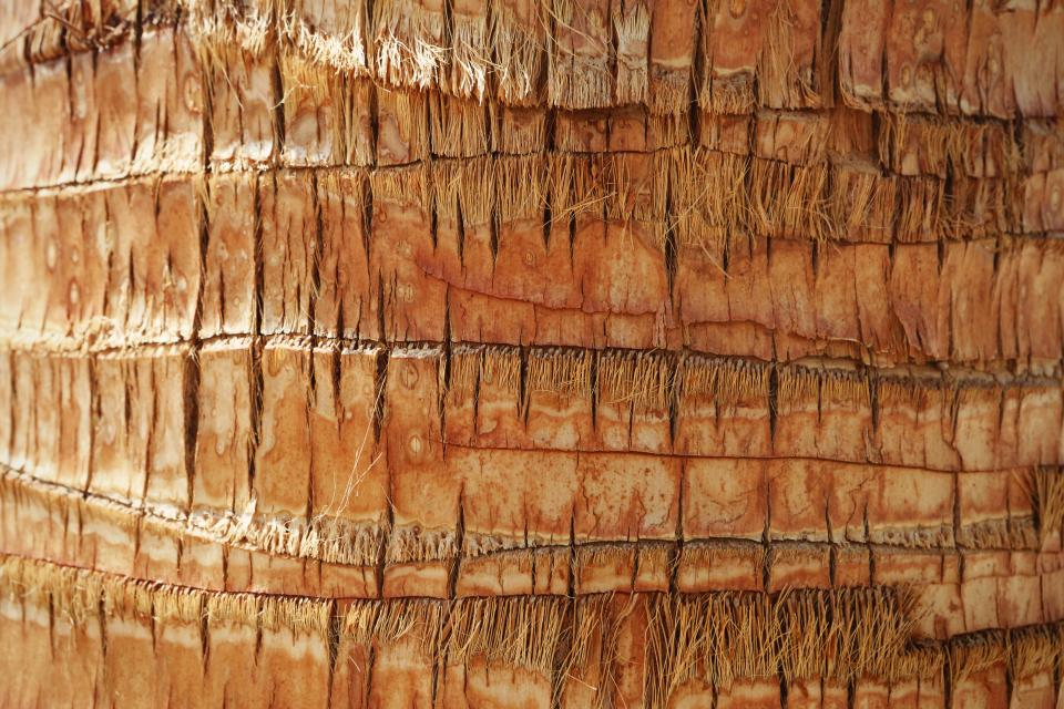 palm tree tree trunk bark