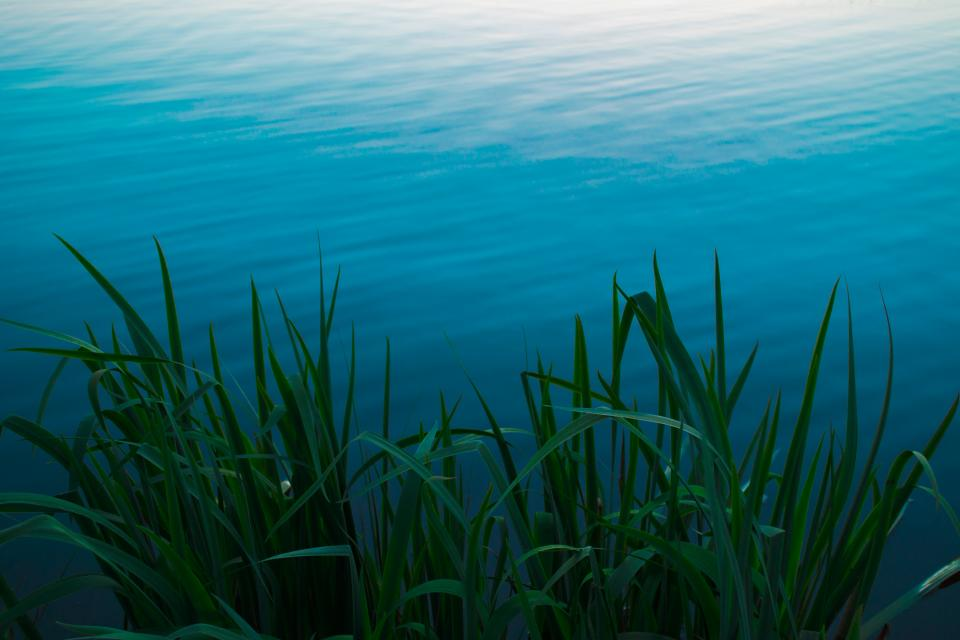 lake blue water nature green leaf grass plant