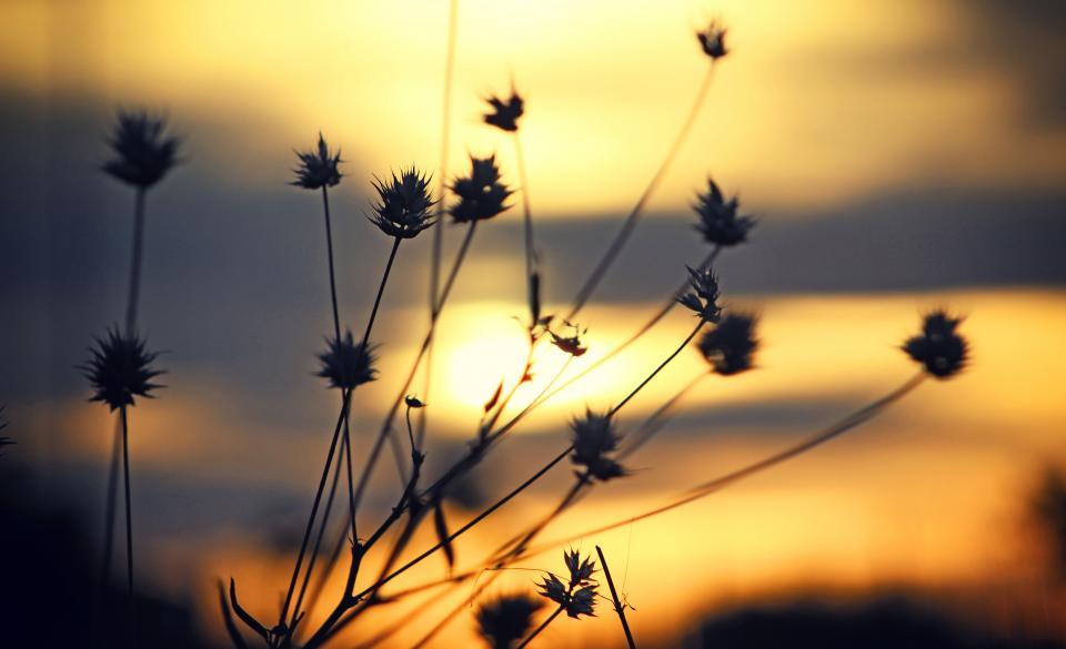 sunset blur outdoor nature grass silhouette