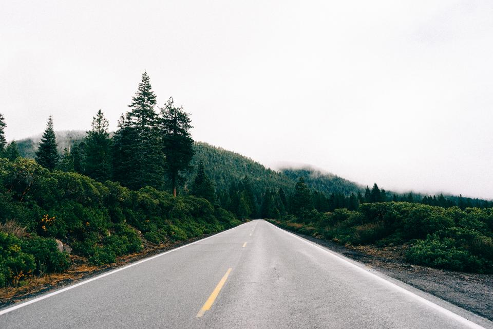 road country green grass trees hills fog foggy grey sky forest