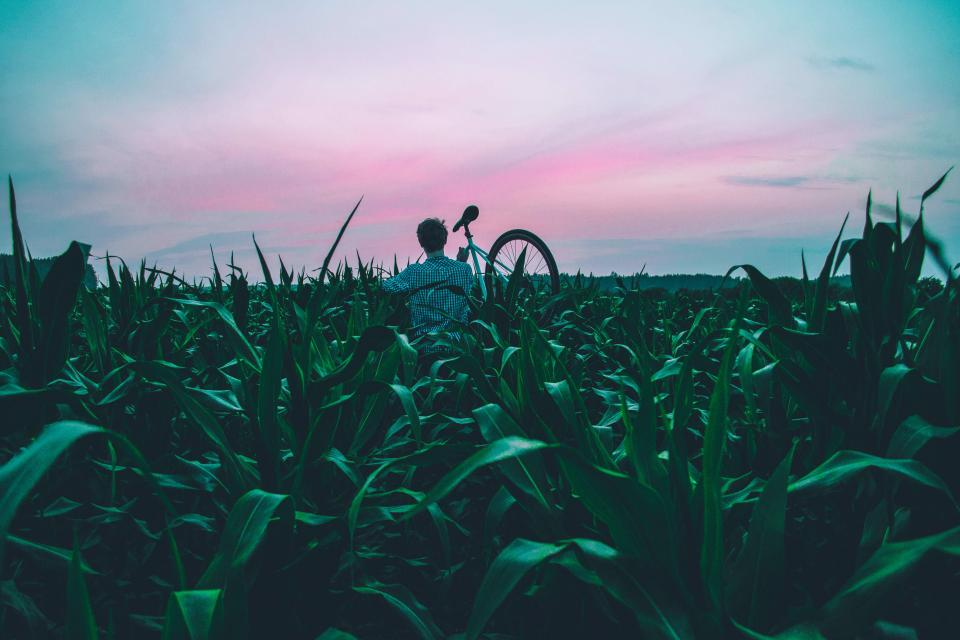 guy people bike bicycle green plants field agriculture farm nature outdoors sunset dusk sky clouds