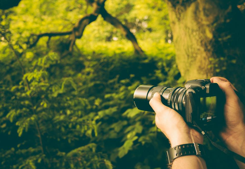green leaves trees nature hand watch camera dslr photographer photography