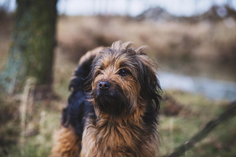 dog puppy pet animal outdoor blur bokeh