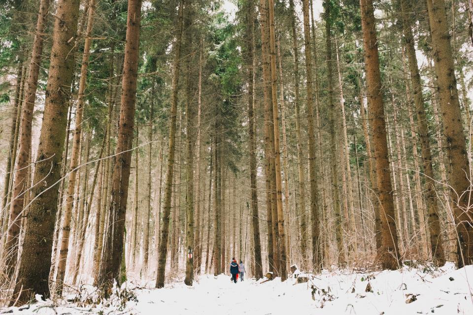 woods forest green trees green travel adventure camping people couple man woman snow
