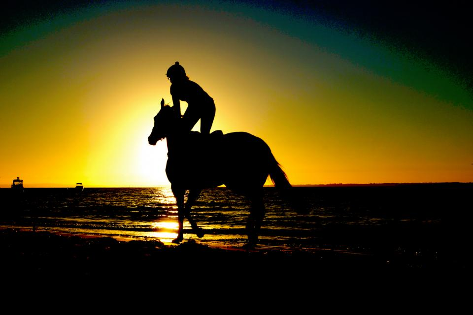 nature water sea ocean sun sunset animals horse people silhouette