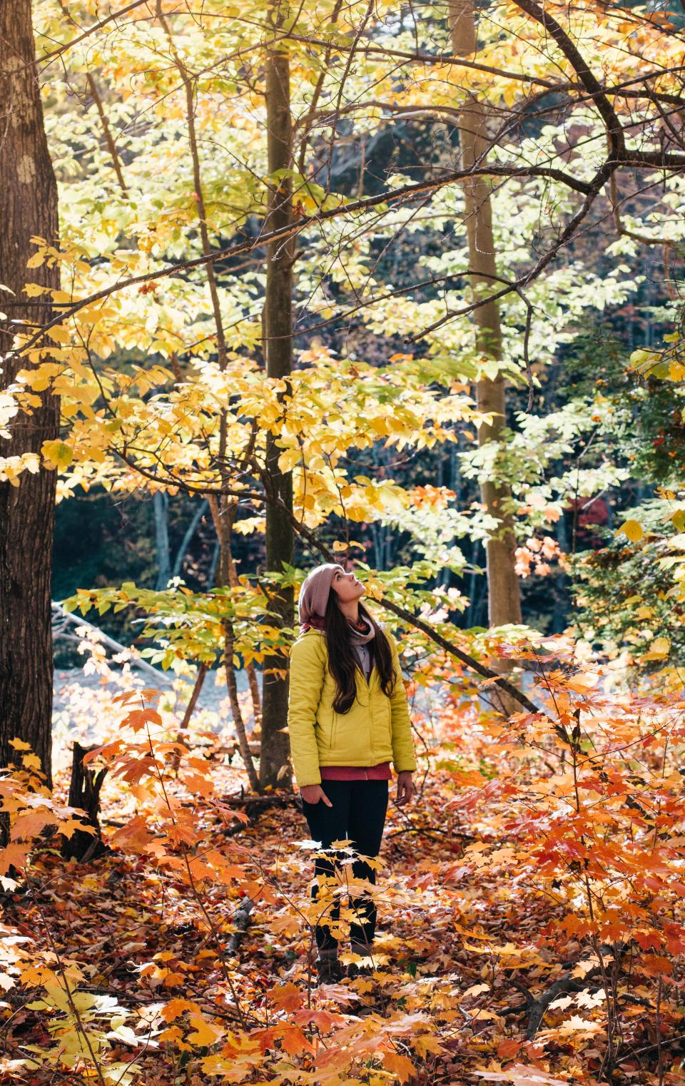 trees plant forest sunrise sunlight nature autumn fall people alone woman adventure outdoor