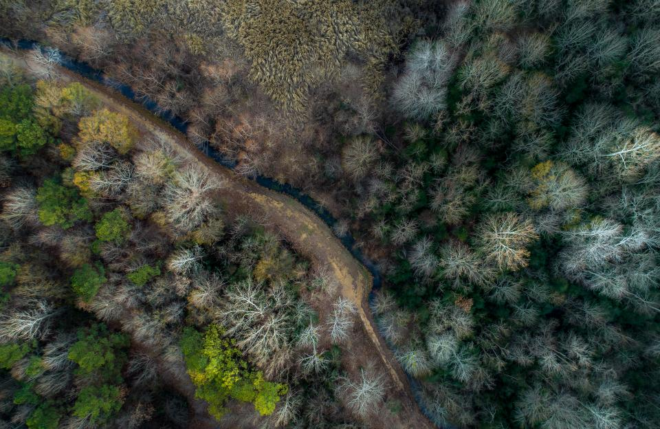 trees plant nature path road forest river water aerial view