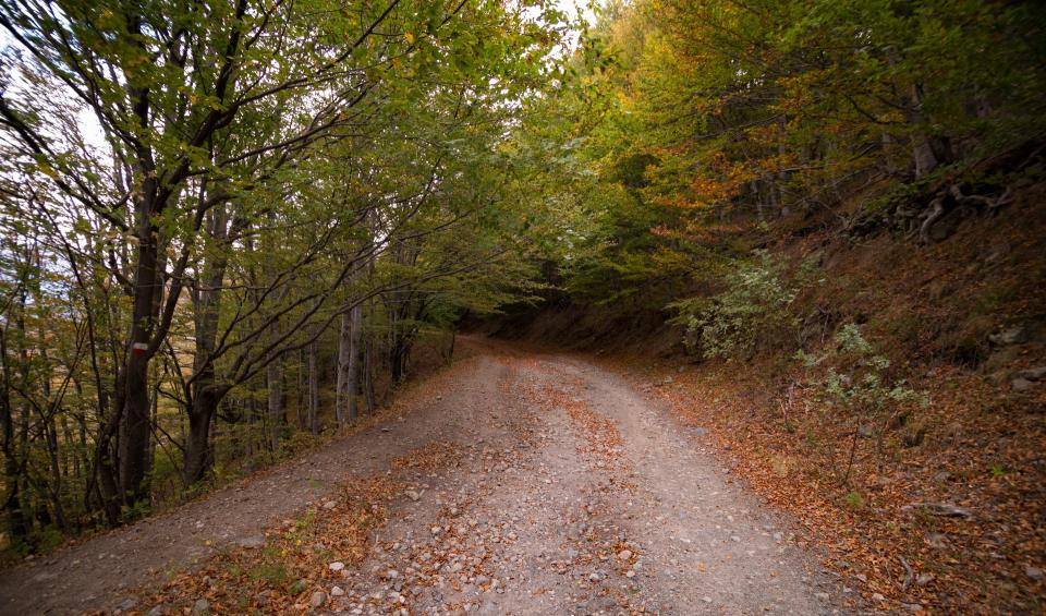 road path green grass trees plant forest leaf fall autumn