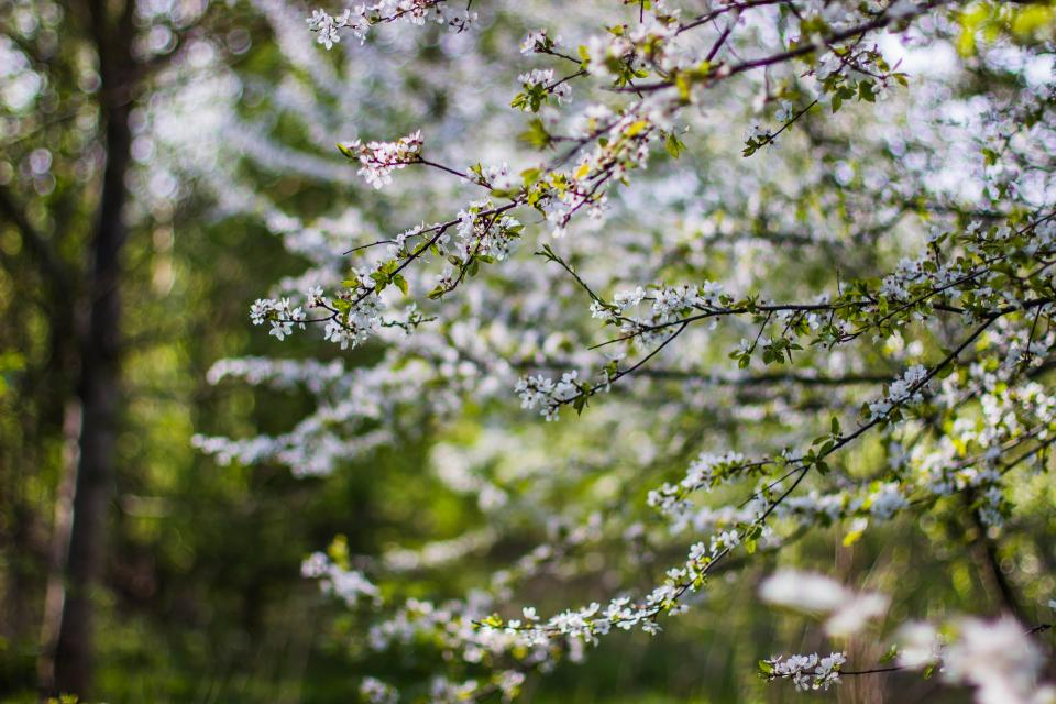 flower tree plant nature bokeh blur