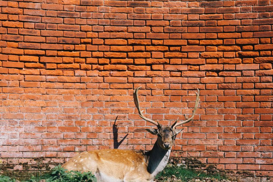 deer antlers animal red bricks wall