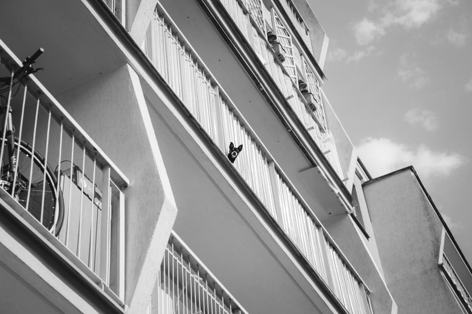 architecture building infrastructure sky cloud black and white dog animal bicycle bike apartment
