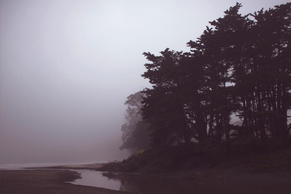 coast shore trees plants nature foggy landscape outdoor