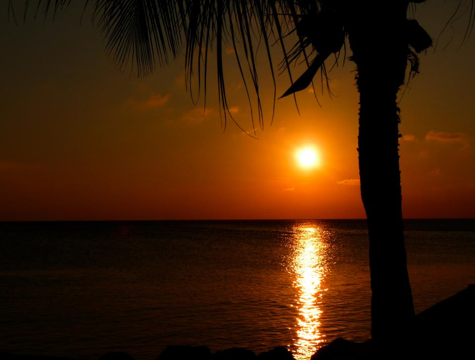 sunset water ocean sea palm trees dusk dark night caribbean
