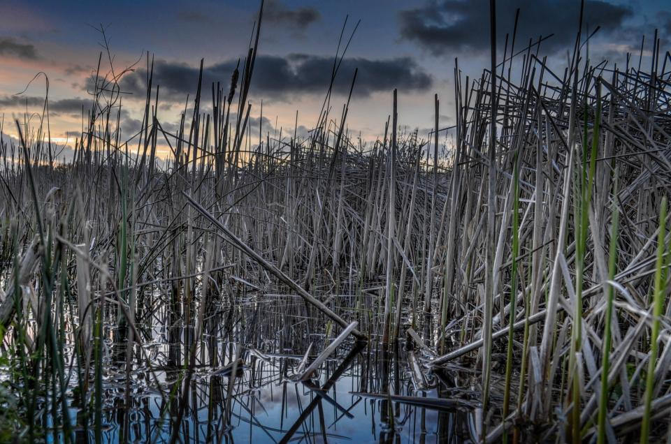 reeds water dusk sky clouds