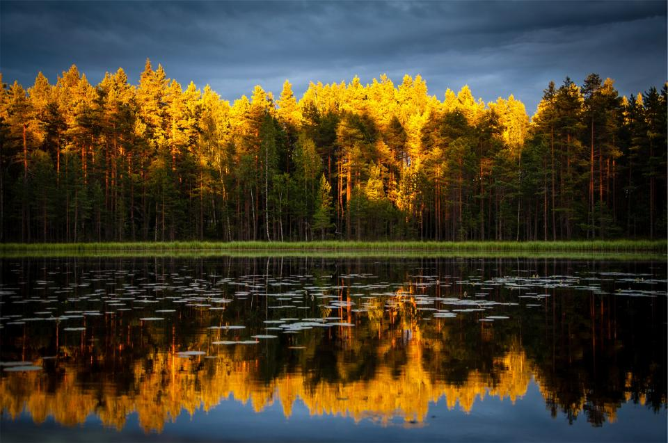 autumn trees forest lake water reflection cloudy dark clouds