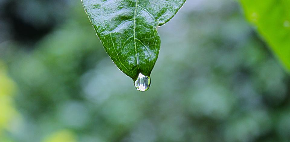 green leaf raining water rain drop