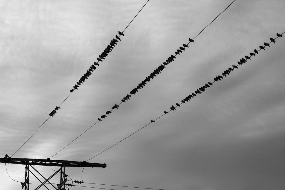 power lines birds sky cloudy grey black and white electricity hydro