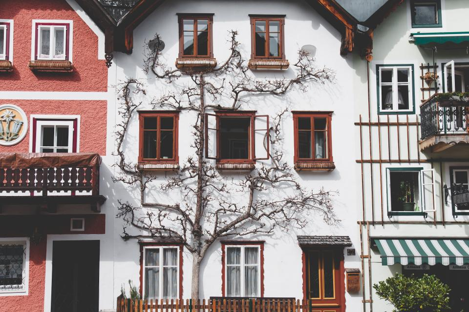 architecture house balcony apartment tree branches nature facade