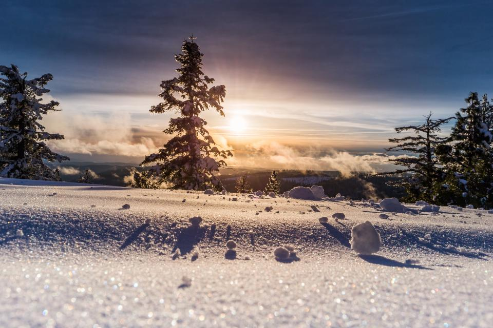 trees plant snow winter landscape nature iceberg cloud sky sunlight sunshine sunrise