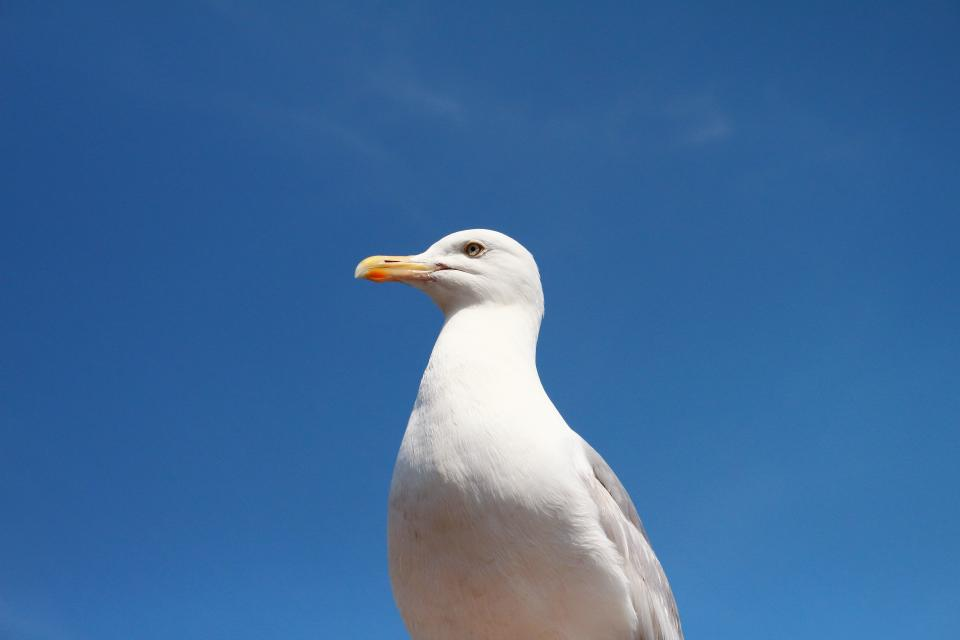 seagull bird animals blue sky