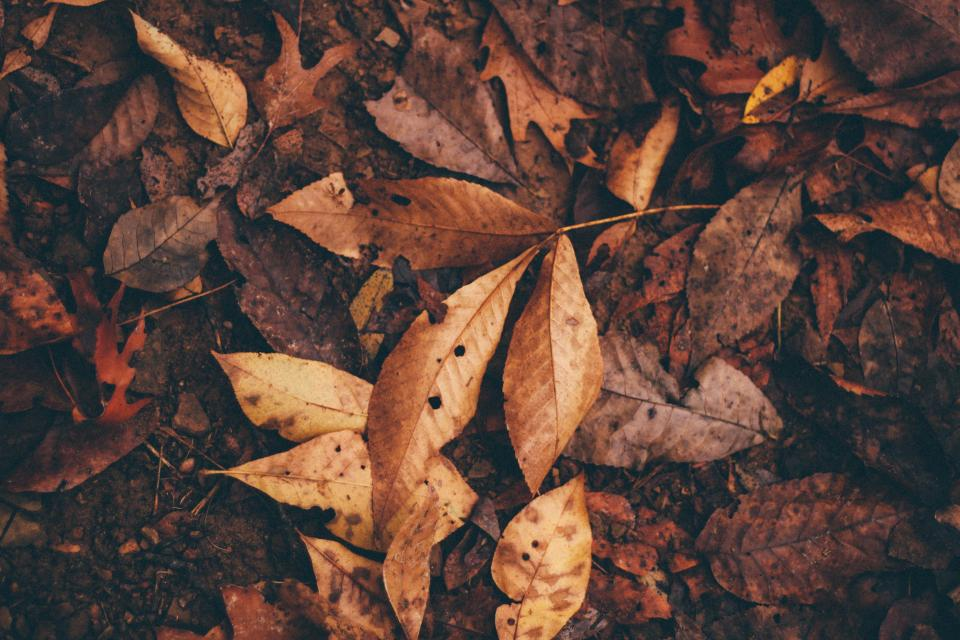 leaves plant garden green autumn fall old