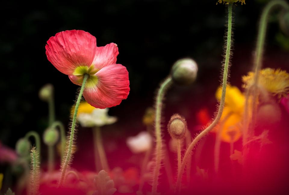 colorful flower plant stem nature garden dark blur