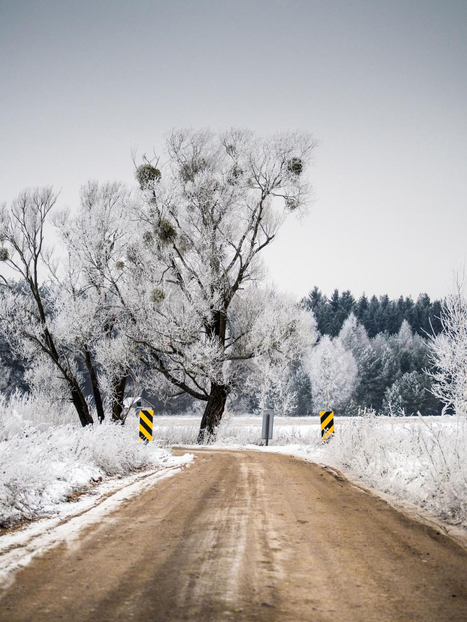 winter dirt road snow trees forest nature outdoors cold ice frozen