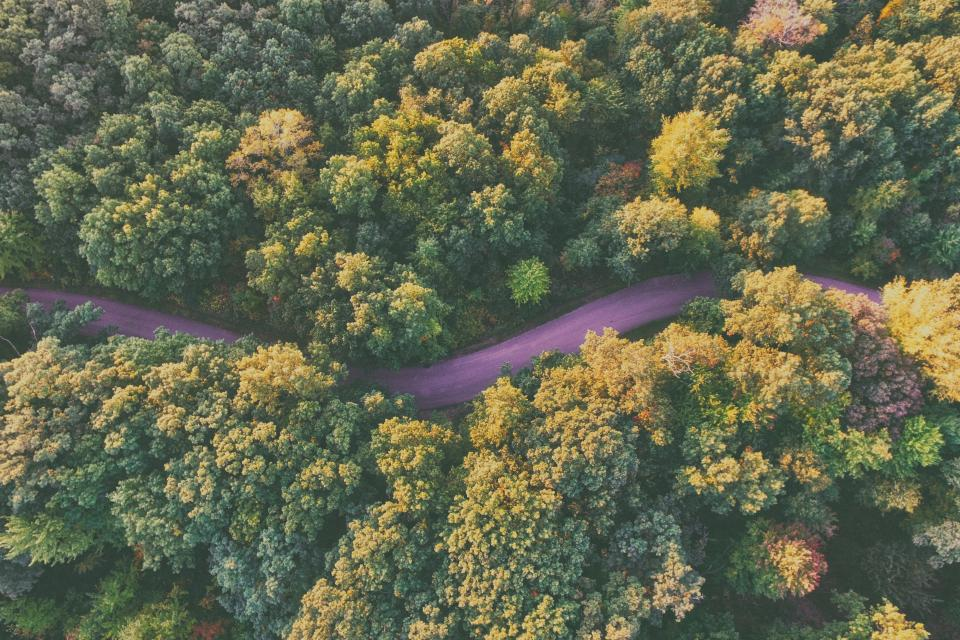 aerial view trees plants forest autumn fall road street