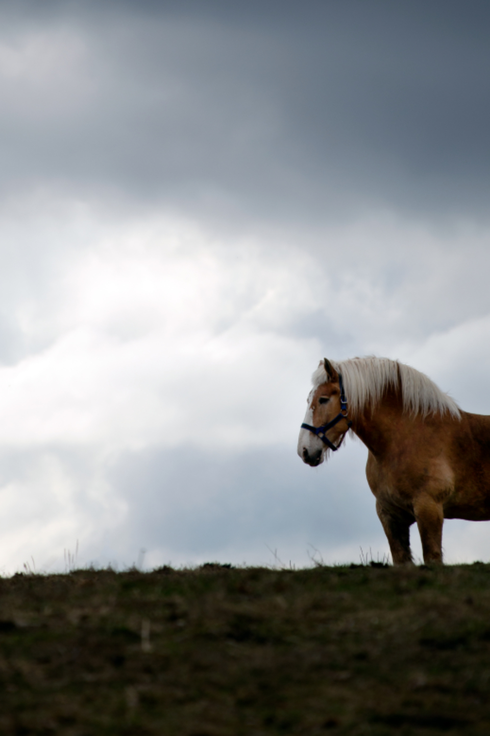 horse pasture clouds sky equine peaceful grass grazing nature view animal stormy scene outside outdoors
