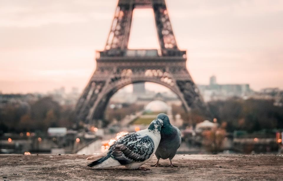 bird couple beak paris eiffel tower urban city architecture infrastructure structure