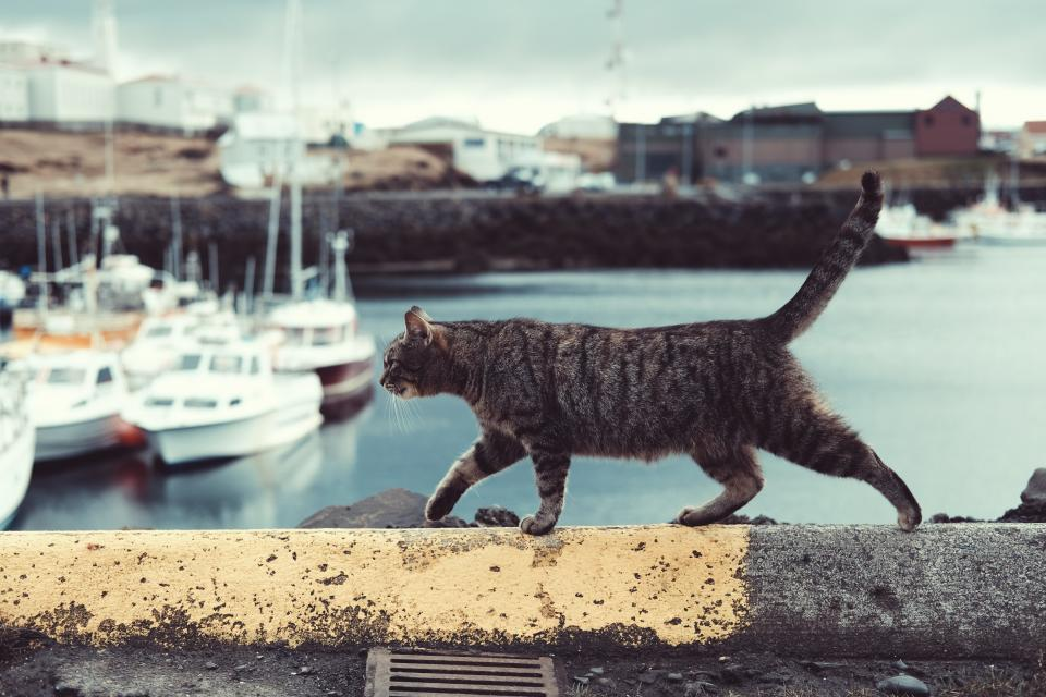 cat pet animal outside sea water coast boat yacht transportation travel blur
