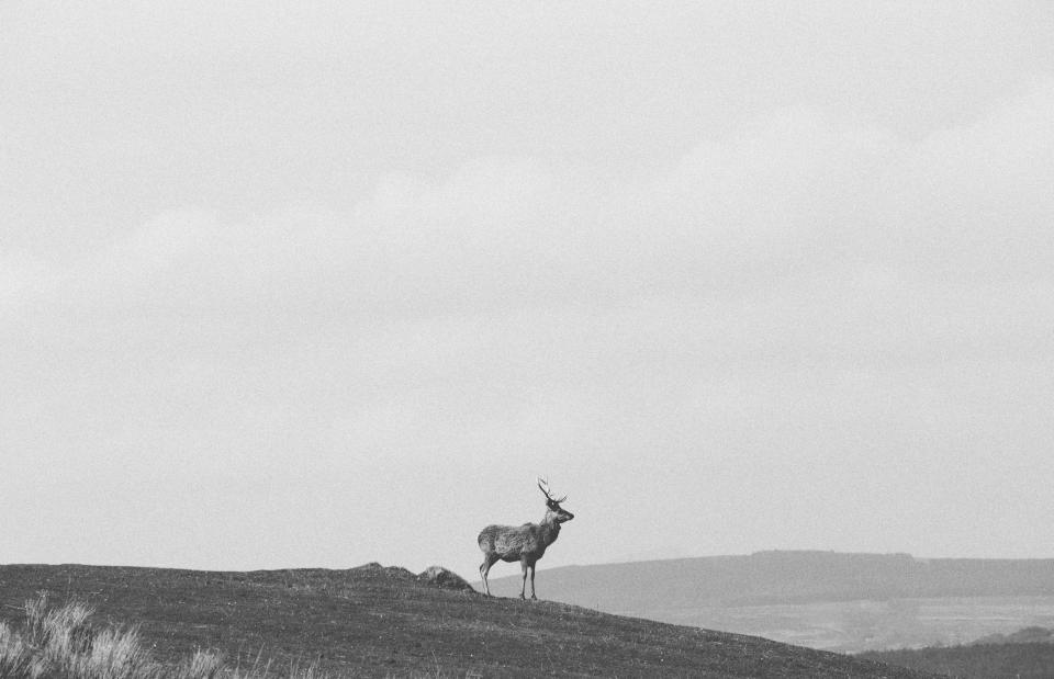 deer animal wildlife peak mountain landscape black and white