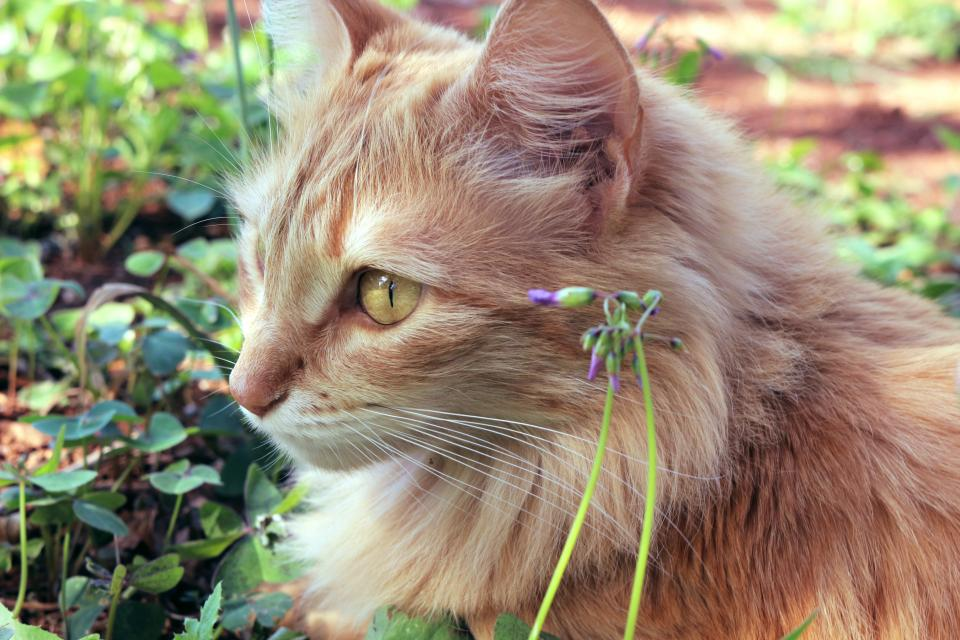cat pet animal green grass outdoor