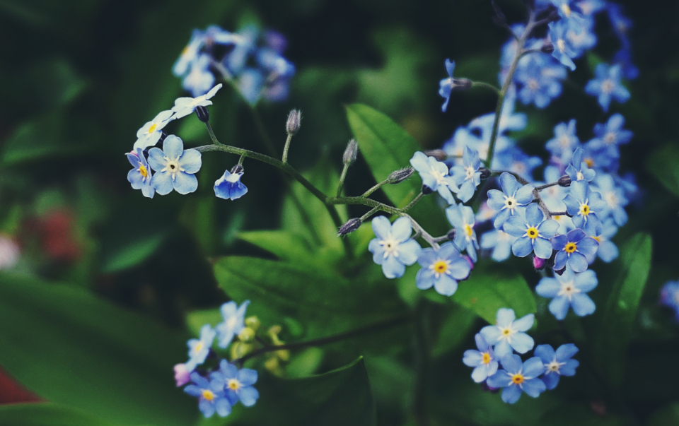 flowers nature plants garden close up bokeh outdoors spring bloom blossom