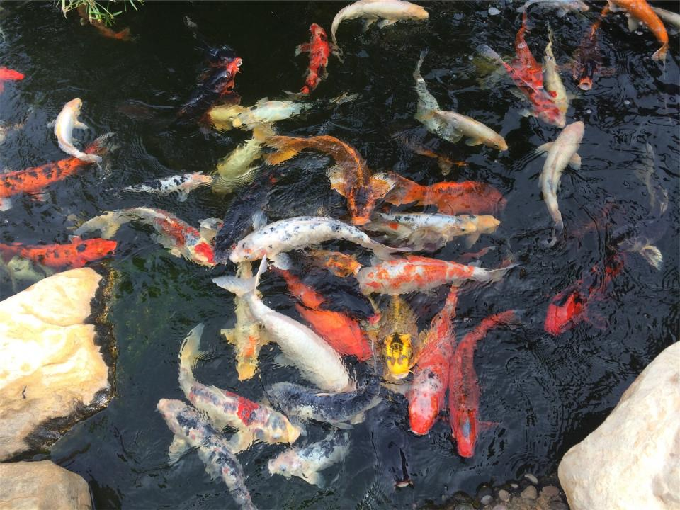 fish pond water