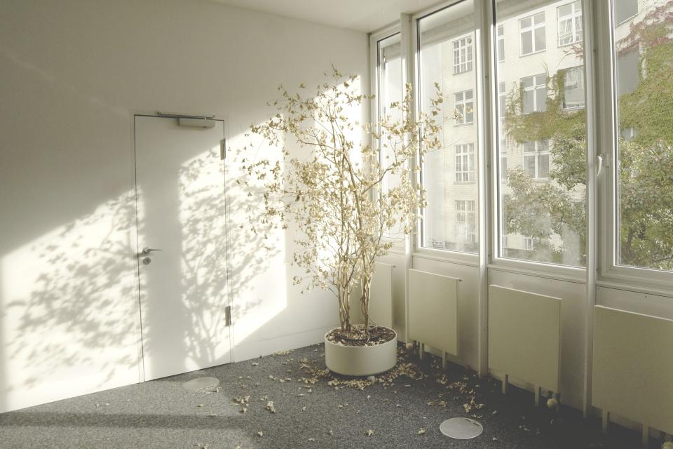 architecture building infrastructure white wall interior flower plant sunny day light