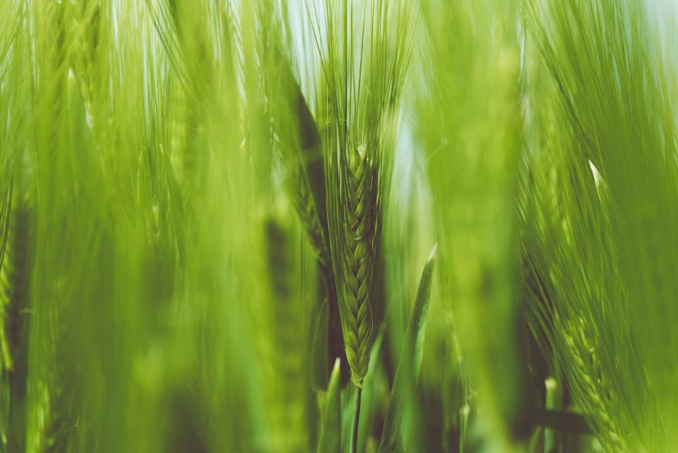 nature grass stems stalks braids outdoors bokeh green