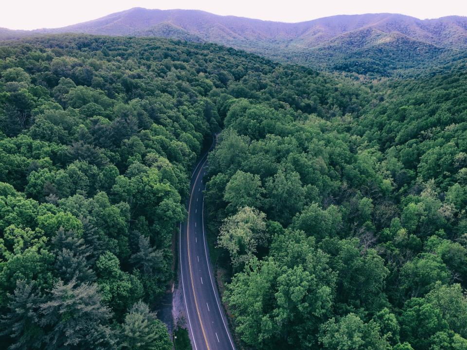 green trees plant nature forest road travel aerial view mountain landscape