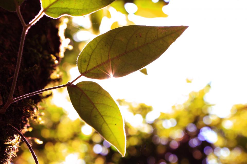 green leaf tree  plant nature blur bokeh sky sunlight sunshine sunrise sunny day morning