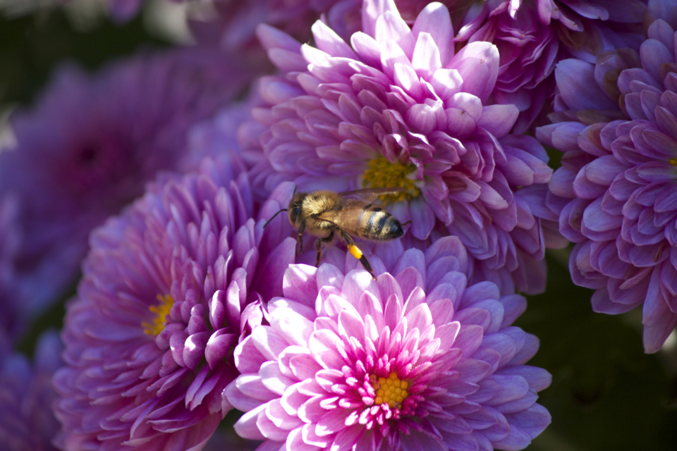 bee flowers summer pollen insect nature outdoors bloom blossom botany garden fresh sunlight