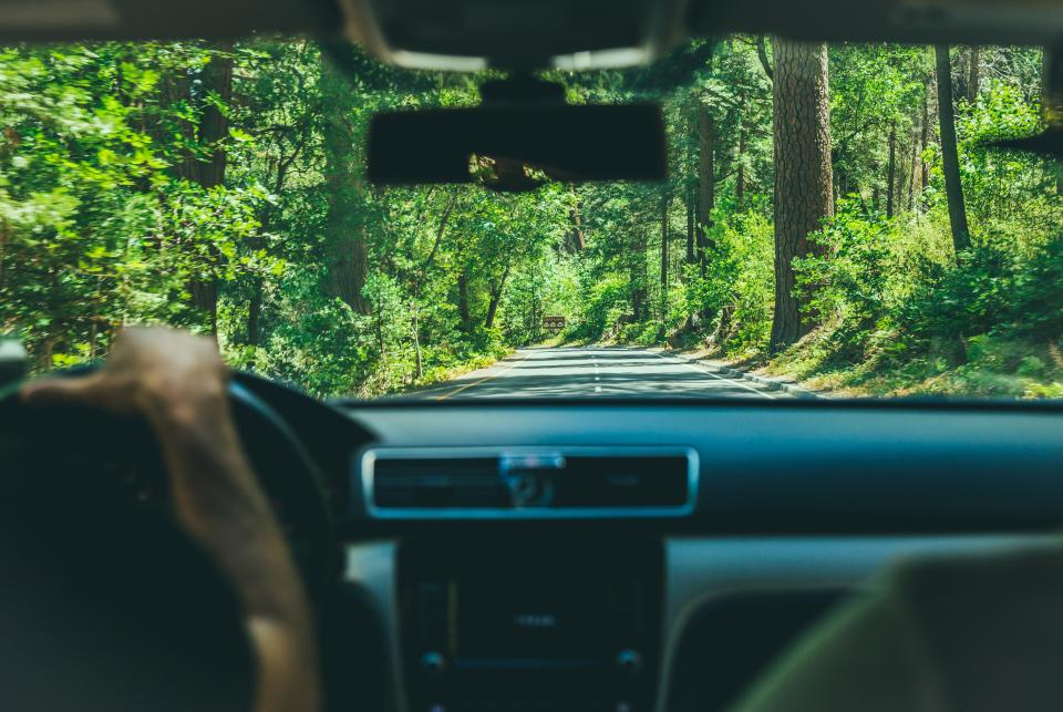 people man guy driver driving travel road trip car nature green trees