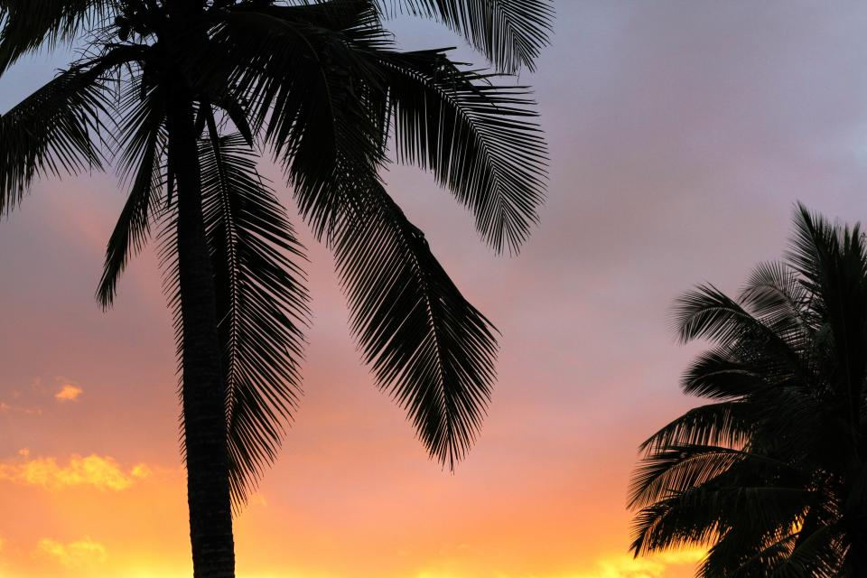 coconut tree sky dark orange clouds sunset sunsrise nature