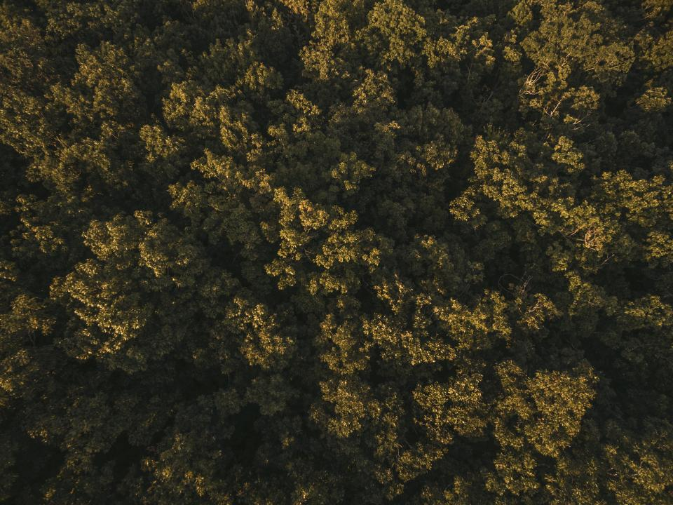 nature landscape aerial travel adventure trees leaves green woods forest