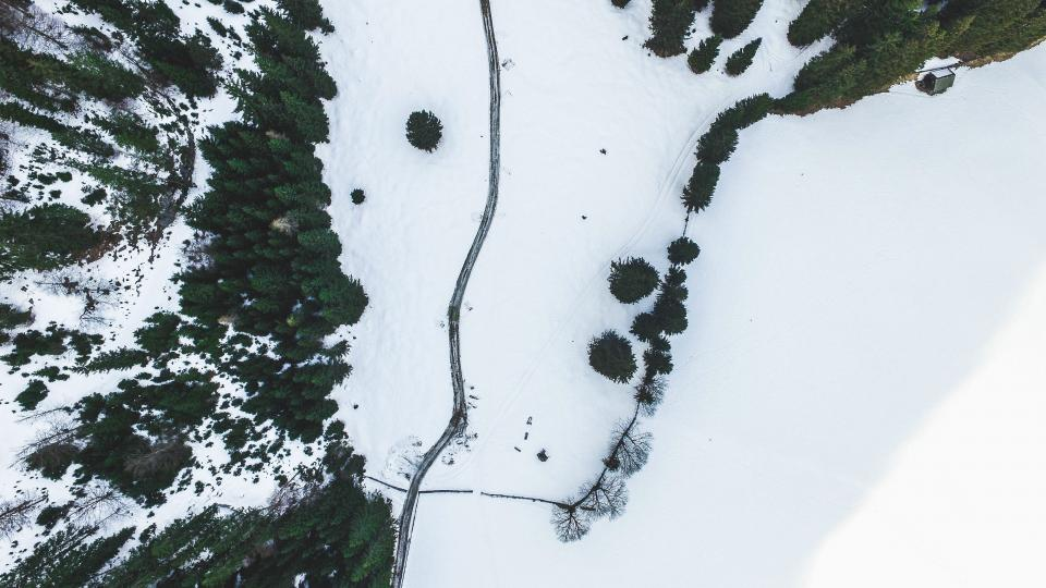 top view plants trees pine aerial snow ice frozen forest nature winter fence