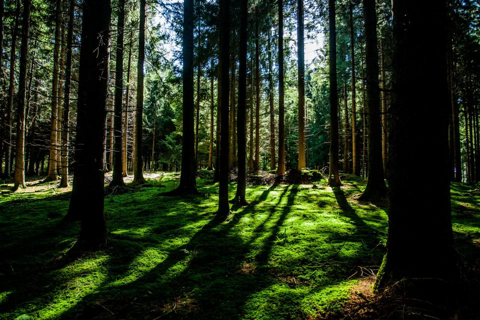 forest woods green trees branches grass bark tree trunks shadows sunlight