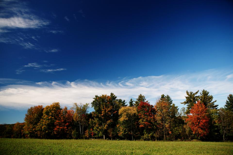 autumn trees colors meadow grass fields blue sky clouds nature outdoors