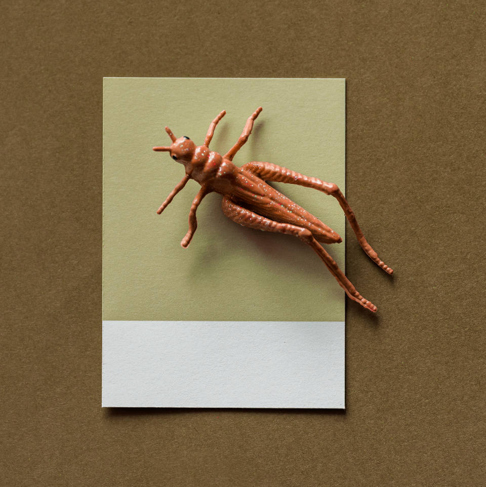 abstract brown bug card colorful concept creative decoration figure fun grasshopper insect joy little mini miniature model paper pattern play shape small symbol textured tiny toy