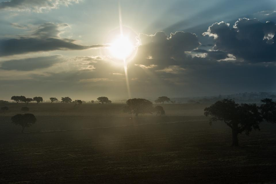 sunrise morning landscape fields grass trees sky clouds sunshine